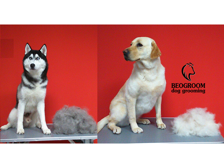 BEOGROOM - DOG GROOMING Pet salon, dog grooming Beograd