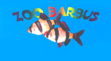 ZOO BARBUS Aquarium shops Belgrade