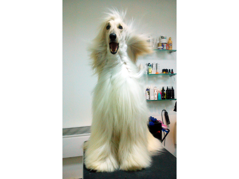 GROOMING TIME Pet salon, dog grooming Beograd