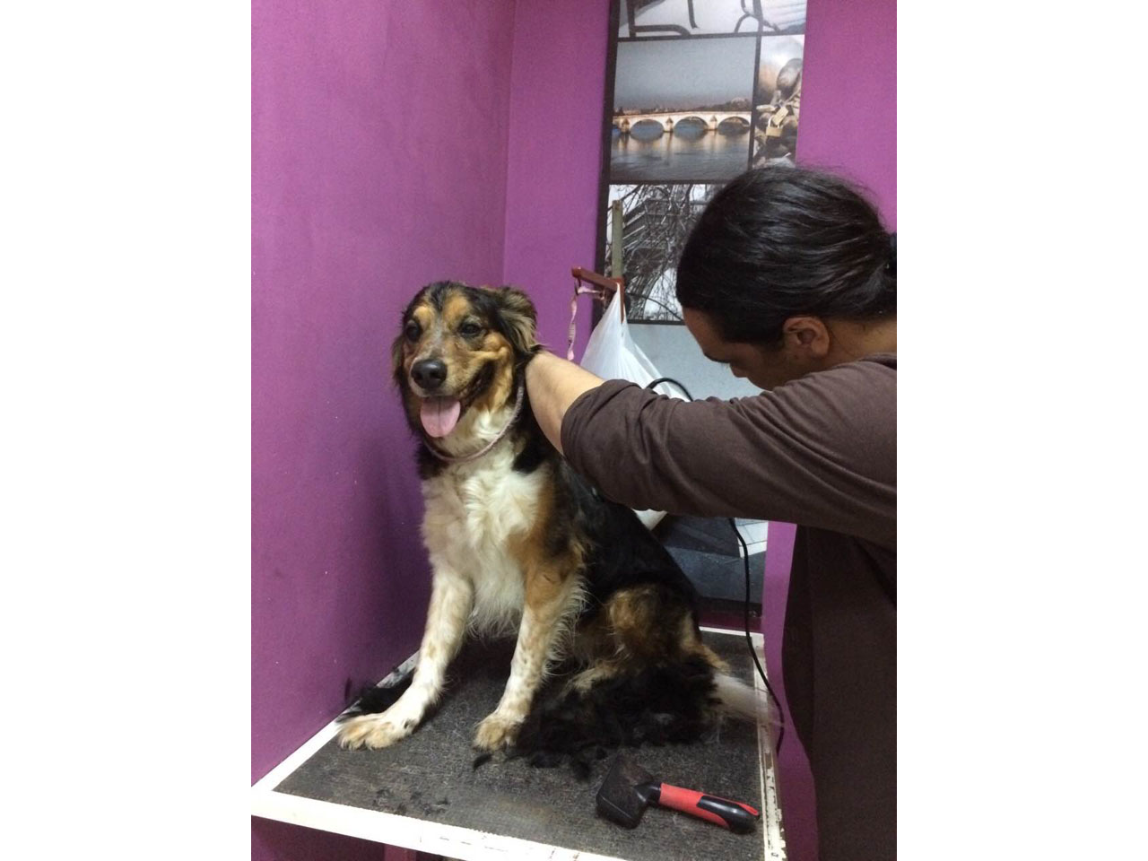 SNOOPY GROOM Pet salon, dog grooming Beograd