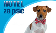 BRUMMENLAND HOTEL FOR DOGS